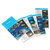 IQ Fischbestimmungs-Karten Rotes Meer für das Logbuch